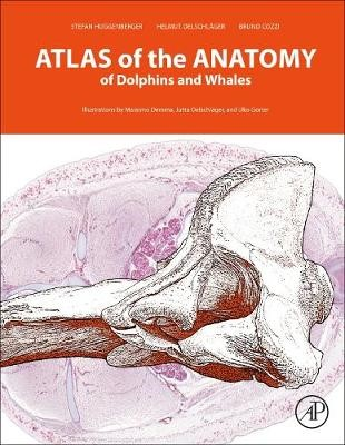 Atlas of the Anatomy of Dolphins and Whales -