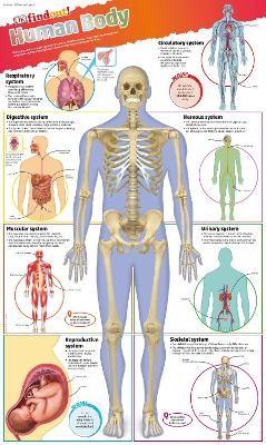 DKfindout! Human Body Poster - pr_18757