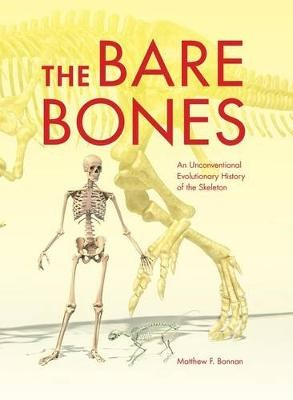 The Bare Bones -