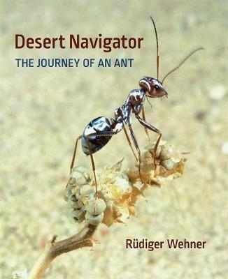 Desert Navigator - pr_1754037