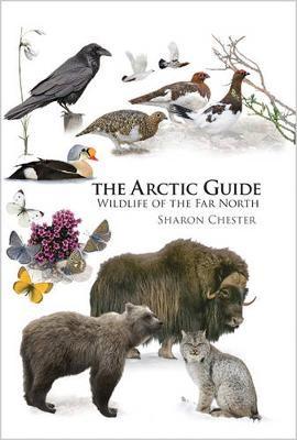 The Arctic Guide - pr_1317