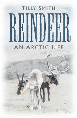 Reindeer - pr_89699