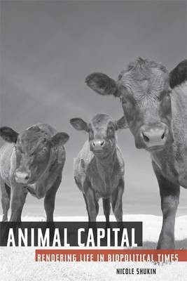 Animal Capital - pr_84477