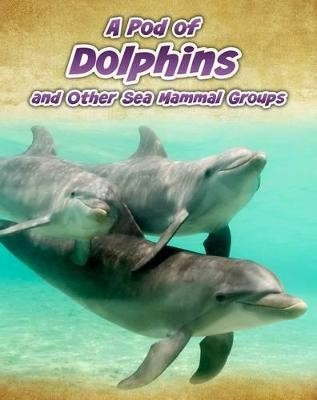 A Pod of Dolphins -