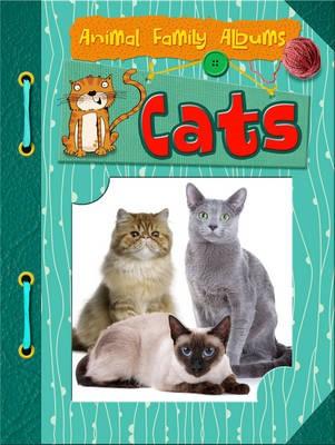 Cats - pr_19698