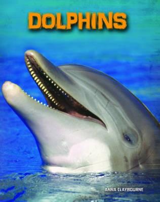 Dolphins - pr_19507