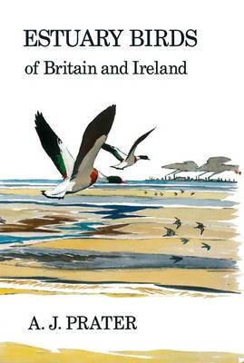 Estuary Birds of Britain and Ireland - pr_16877