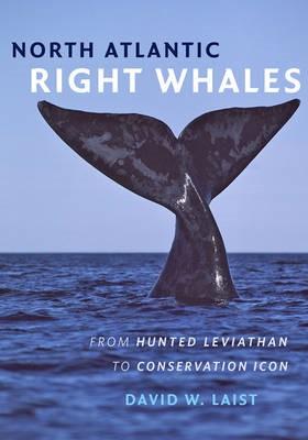 North Atlantic Right Whales - pr_337395