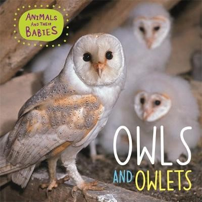 Animals and their Babies: Owls & Owlets - pr_134723
