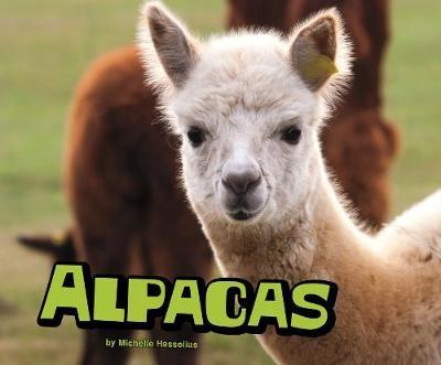 Alpacas - pr_27499