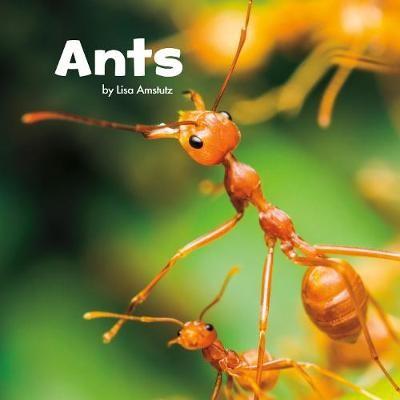 Ants - pr_18419