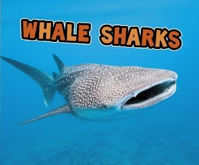 Whale Sharks - pr_19518