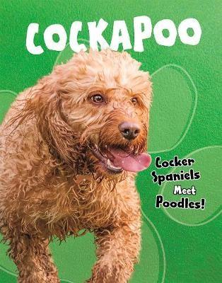 Cockapoo -