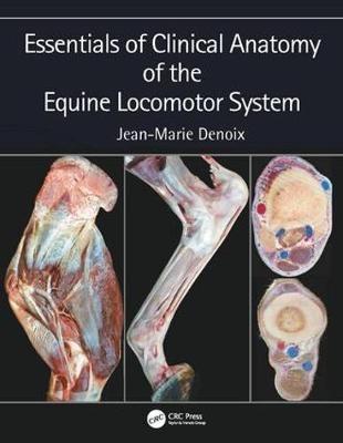 Essentials of Clinical Anatomy of the Equine Locomotor System - pr_403884