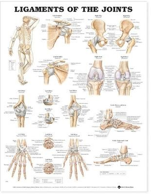 Ligaments of the Joints Anatomical Chart - pr_99375