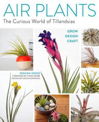 Air Plants: The Curious World of Tillandsias - pr_288549