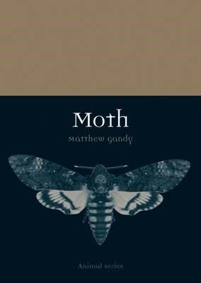 Moth - pr_413491
