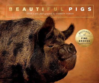 Beautiful Pigs - pr_1744705