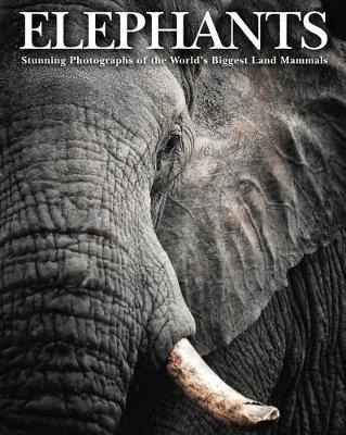Elephants - pr_1745166