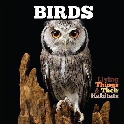 Birds - pr_341041