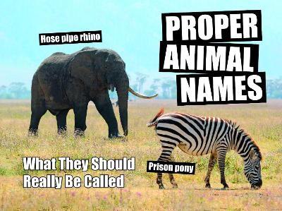 Proper Animal Names -