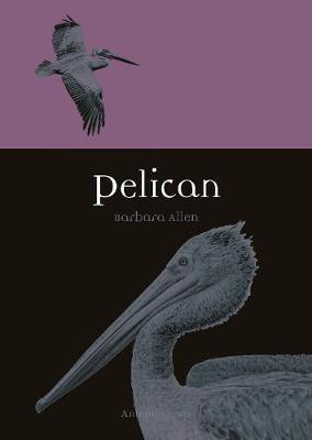 Pelican -