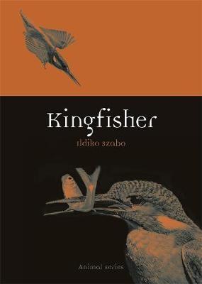 Kingfisher -