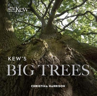 Kew's Big Trees - pr_342363