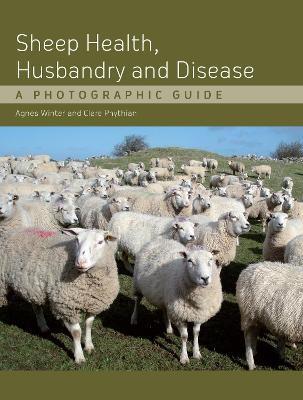 Sheep Health, Husbandry and Disease - pr_18639
