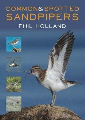 Common and Spotted Sandpipers -