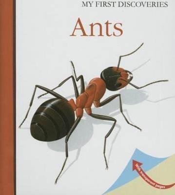 Ants - pr_16326