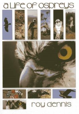 A Life of Ospreys - pr_1751777
