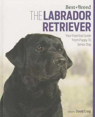 Labrador Retriever Best of Breed - pr_16805