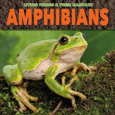 Amphibians - pr_297665