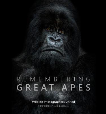 Remembering Great Apes - pr_314375