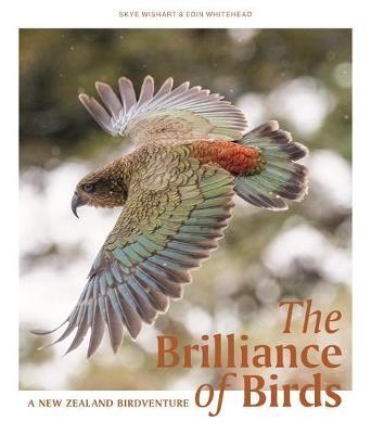 The Brilliance of Birds -